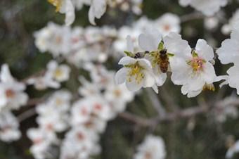 Silifke'de bademler çiçek açtı
