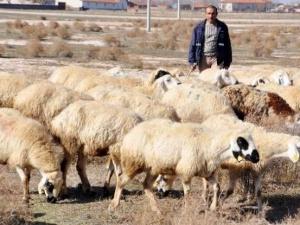Çobanlara müjde