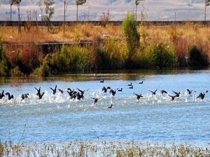 Van Gölü havzasının kuş cenneti: Bitlis