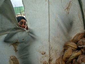 Dünya Gıda Programı'ndan Suriye için acil çağrı