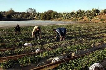 Tarım ve hayvancılık sektöründe 14 bin kişi eğitilecek