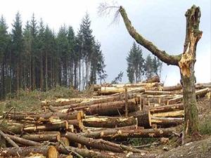 Orman suçları yüzde 60 azaldı