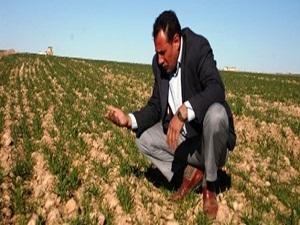 Kuraklıktan çekinen çiftçi ürüne sigorta istiyor