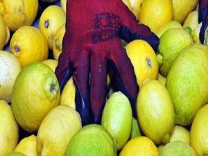Japonya'ya limon ihracatı başlıyor