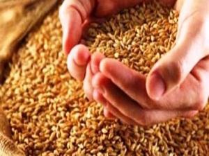 Kuraklığa, dayanıklı tohum formülü