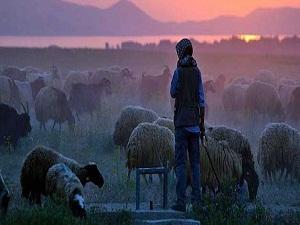 Çobanlık değil sürü yönetimi
