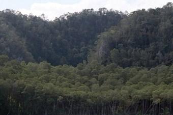 Ormanların sağlık durumu iyi