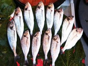 Balığın fiyatı sofraya gelinceye kadar katlanıyor