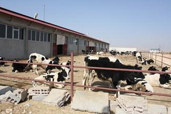 Kırsal kalkınma projesi kapsamında tesis kurdu