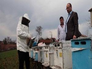 Çevre kirliliğini 'arılar' tespit edecek!