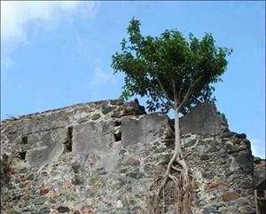 Bismillah'tan başka hangi sır ağacı bu duvarda tutabilir ki?