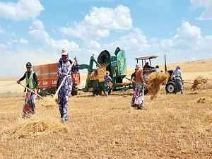 Tarım işçisi kadınların sağlığı alarm veriyor!