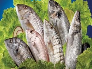 Avrupa, Türk balığını tüketiyor