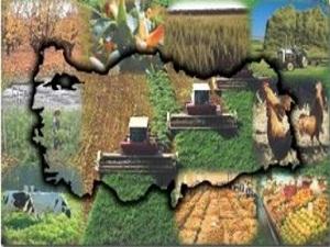 Bitkisel üretim değeri yüzde 18 arttı