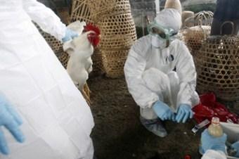Hollanda'da kuş gribine rastlandı