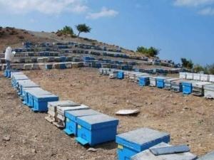 Dalaman'da 136 Mevkiide Arı Konaklama Alanları Tespit Edildi