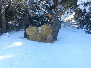 Karla kaplı alanlara yaban hayvanları için yem bırakıldı