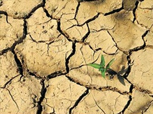 Son yağışlar kuraklık tehlikesini azalttı