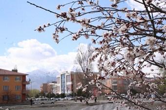 Erzincan'da bahar erken geldi