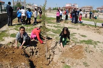 Manavgat'ta ocak içinde 400 bin fidan dikildi