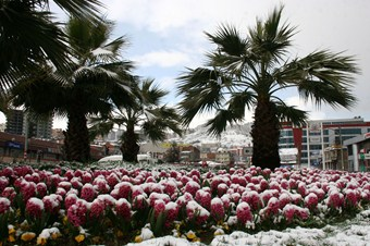 Baharı beklerken kış geldi
