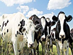 Bursa hayvancılık ve tarımda da gelişecek