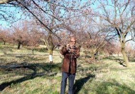 Elazığ'da kayısı ağaçlarını don vurdu