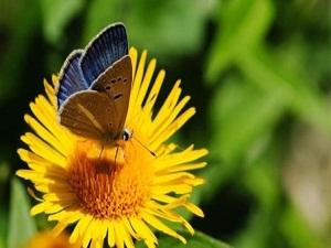 Kelebek cenneti: Antalya