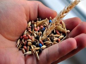 Yerli sertifikalı tohum 1 milyon tona koşuyor