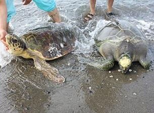 Kaplumbağalara denizde fizik tedavi
