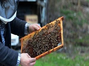 Türkiye'de 6,5 milyon arı kovanı var