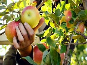 En çok tarım ilacı bu gıdalarda