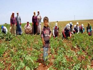 Tarım işçisinin ücreti yüzde 10,9 arttı