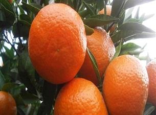 Portakal suyunu böyle tüketin