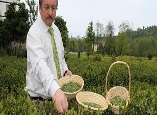 Bu çay Türkiye'de gram ile satılacak