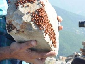 Böcekler, turizme 'uğur' getirecek