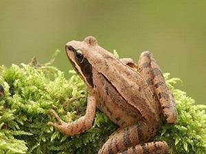Kurbağalar Korunmazsa Sinek Sayısı Patlar