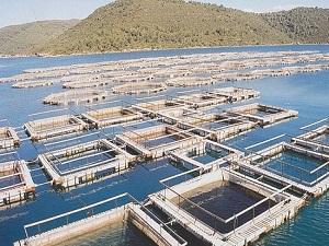 Balık üretiminde çiftliklerin payı artıyor