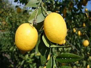 Limon fiyatı rekora koşuyor