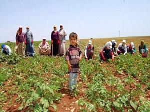 Tarımdaki istihdamın yüzde 83'ü kayıtdışı