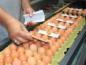 Yumurta üretimi yüzde 11,2 azaldı