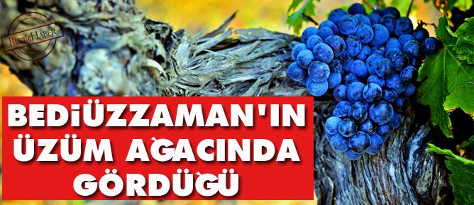 Bediüzzamanın üzüm ağacında gördüğü