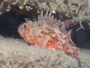 Yapay Resiflerden Balıkçılığa Büyük Katkı