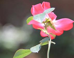 Bir çiçeğin duası