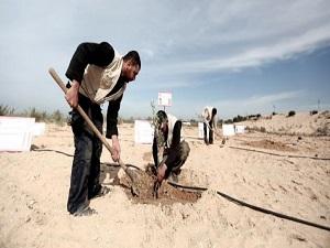 Gazzeye Soma için 301 fidan