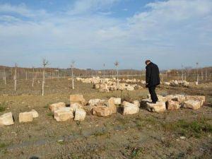 Sökülen Tarihi Köprünün Taşları Ortada Bırakıldı