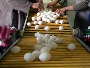 Yumurta 1 ayda yüzde 50 zamlandı