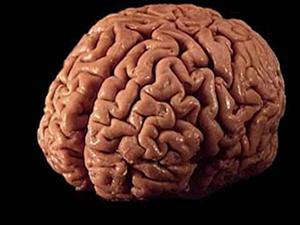Beyin hasarı kök hücre ile tedavi edildi