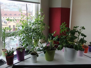 Süs Bitkisi Yetiştireceklere Uyarı
