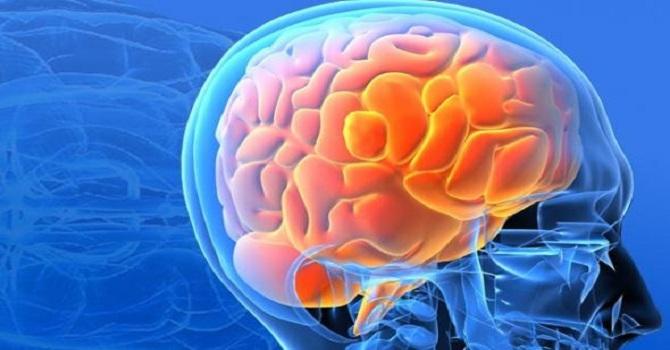 Bilim adamları insan beyni üretti
